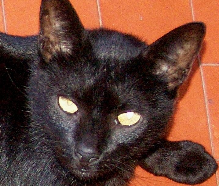 Gato Preto (2)