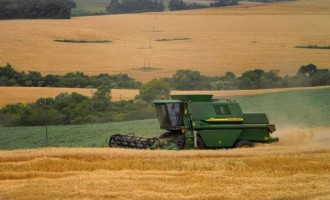 Inicia a colheita do trigo no RS