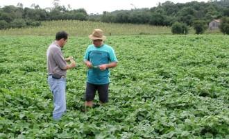 Condições climáticas atrapalham plantio das culturas de verão no RS