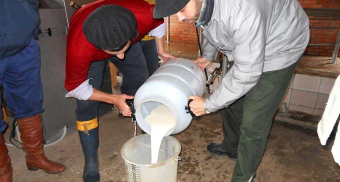 Preço do leite teve queda mas tendência é de recuperação