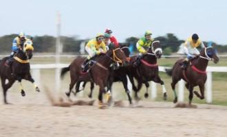 Grande Prêmio Rainha da Fronteira acontece domingo no Jockey Club