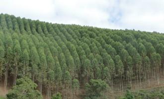 Expofeira: Florestas plantadas serão tema de painel