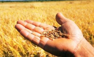 Chuvas retardam plantio dos grãos de verão no Rio Grande do Sul