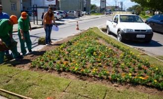 Revitalização de áreas verdes: rótulas começam a ser embelezadas