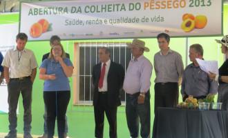 Abertura da Colheita do Pêssego em Canguçu referenda ações da Ascar-Emater/RS
