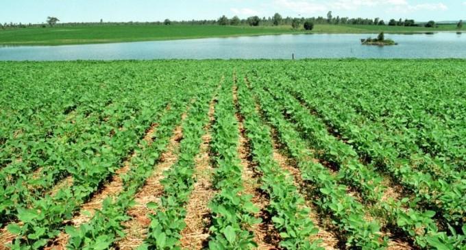 Plantio de soja é finalizado no Estado e milho se encaminha para o final do cultivo