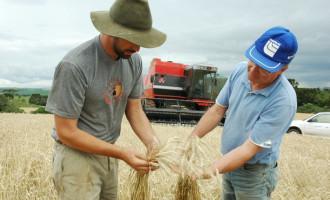 Colheita do trigo chega ao final no RS e safra pode ser a maior da história