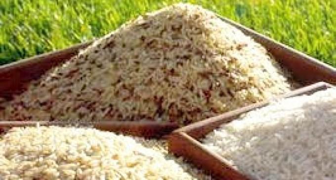 Leilão de arroz irá negociar 70 mil toneladas