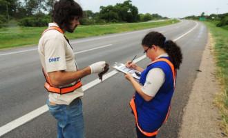 Atropelamento de animais na rodovia é monitorado durante obras de duplicação
