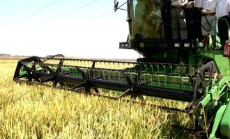 Tem início a colheita de arroz no Rio Grande do Sul