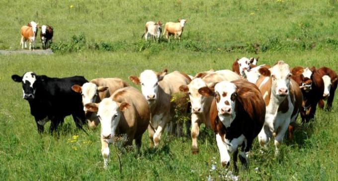 OIE oficializa Rio Grande do Sul como zona livre de aftosa sem vacinação