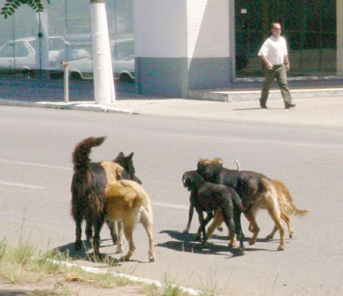 Cachorros02