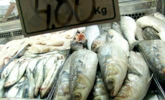 Semana do Peixe inicia nesta Segunda
