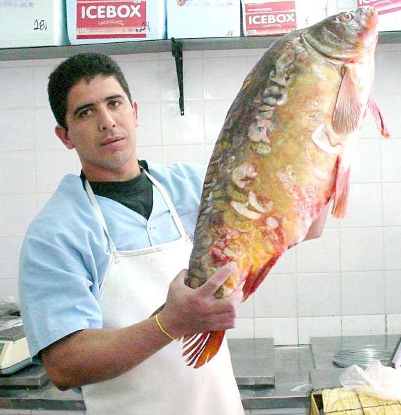 Peixes03