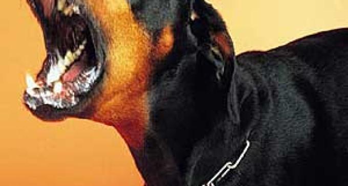 Centro de Zoonoses promove imunização de cães e gatos