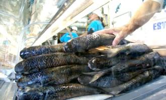 Confira os locais da Feira do Peixe na Semana Santa