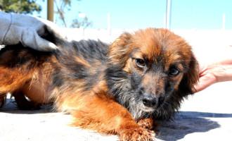 Castração de cães começa nesta quinta-feira