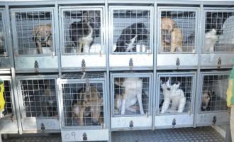 Castração de cães e gatos tem início em Pelotas