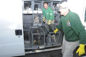 No primeiro ano do projeto, cerca de 300 animais deverão ser castrados