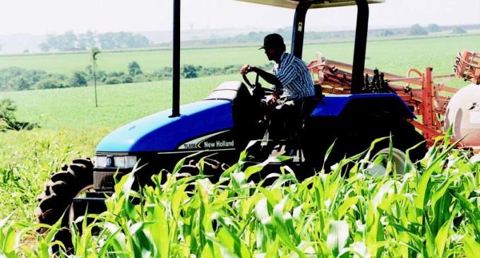Sicredi consolida-se em primeiro lugar no RS em número de operações de crédito rural