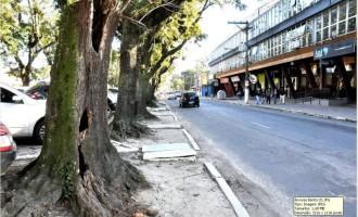 Árvores mortas que oferecem risco de queda serão cortadas