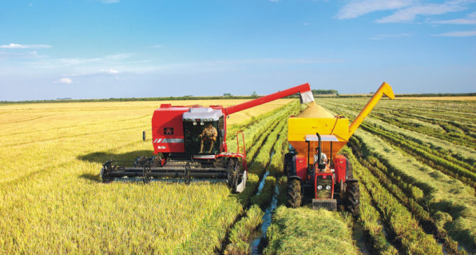 Colheita da safra de arroz está próxima de ser finalizada