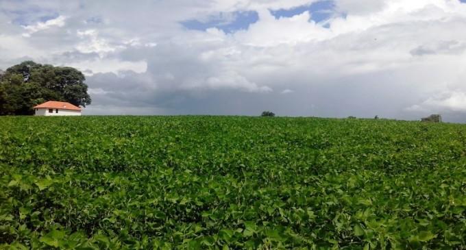 SOJA : Área semeada já chega a 70% no Estado