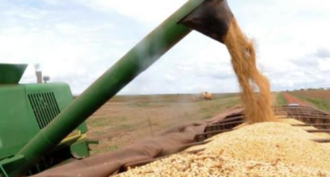 AGRONEGÓCIO : Soja impulsiona aumento das exportações