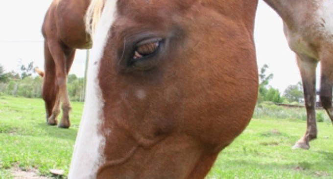 CAVALOS : Hospedaria Municipal realiza doação de 15 animais