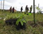 Cortinas vegetais diminuem impactos no campo