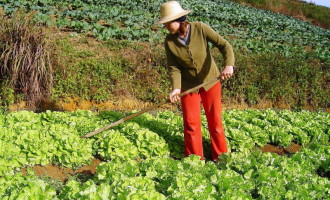 Adultos e idosos da zona rural de Pelotas estão dormindo mal