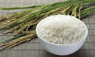 EXPOARROZ 2017 : IRGA apresentará projeto de valorização do arroz