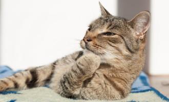Hoje é o dia Mundial do gato: Veja como cuidar dos bichanos