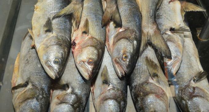 SEMANA SANTA : Começa hoje a 6ª Semana do Peixe