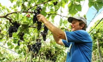 PESQUISA DO IBGE : Agricultura familiar abrange 25% da área rural no RS