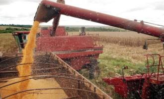 Safra de grãos eleva recorde histórico para 222,9 milhões de toneladas