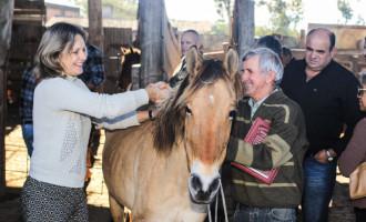 Mais nove cavalos da Hospedaria são adotados