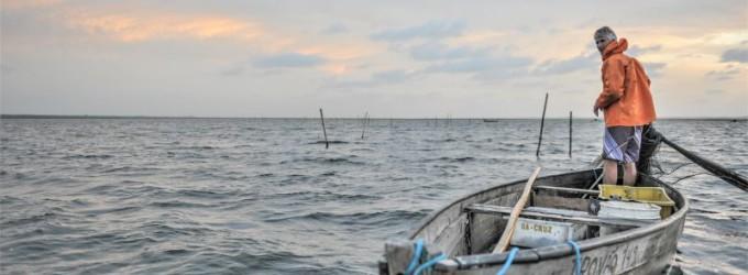 PESCA : Período de defeso preserva a biodiversidade