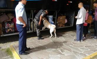Brigada Militar realiza operação com cães em ônibus da cidade
