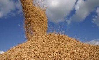 Qualidade do arroz brasileiro garante valorização no mercado externo