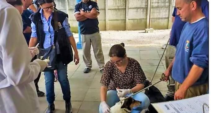 Prefeitura vai retomar microchipagem de cães e gatos
