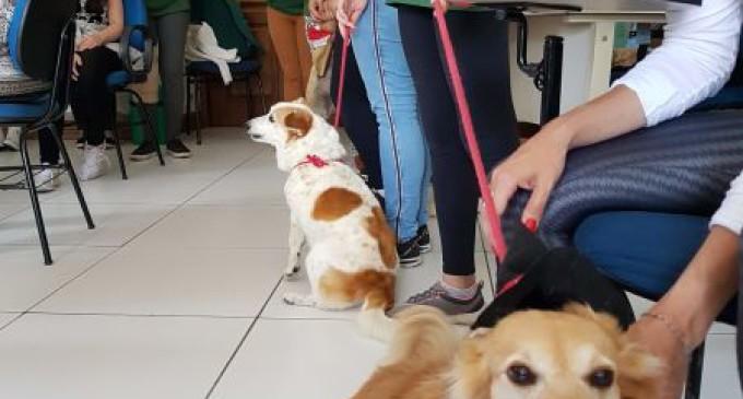 UFPel realiza oficina de Pet Terapia