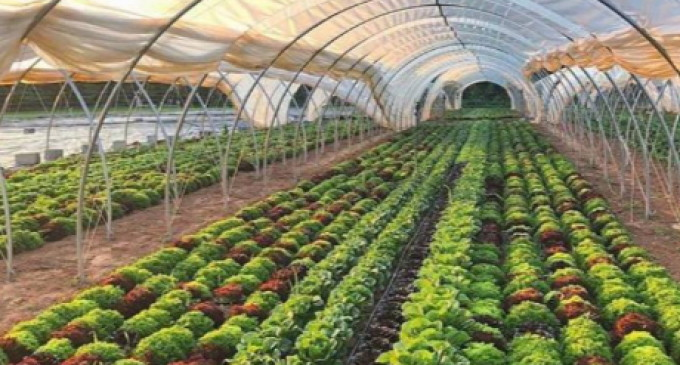 Agroindústrias locais crescem mais de 100% em dois anos