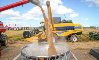 Colheita de arroz está concluída em 25 municípios