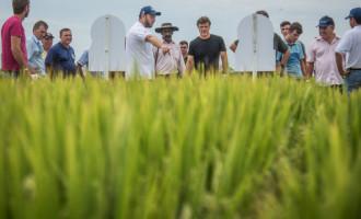 Debate apresenta realidade da crise do arroz nos municípios