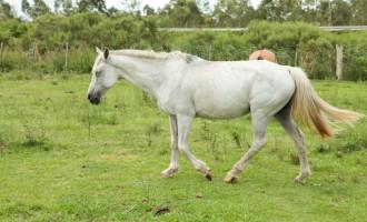Hospedaria municipal libera 16 cavalos para adoção