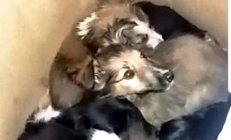 PRF resgata filhotes abandonados
