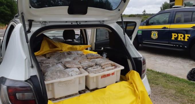 PRF apreende 180kg de camarão em Pelotas