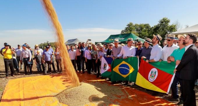 SOJA : Estado abre colheita de uma das maiores safras de soja da história