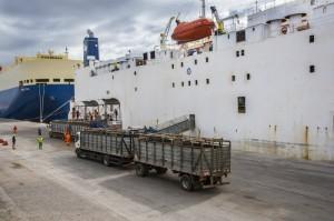 Em um dos mais recentes embarques, 9.359 animais de Capão do Leão e Rio Grande foram embarcados no Kenoz com destino ao Egito